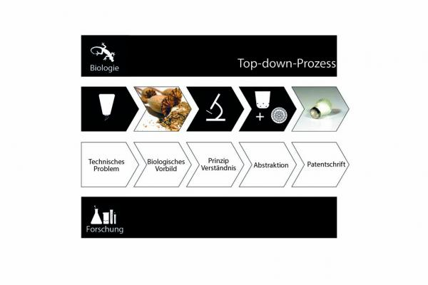 """Top-down-Prozess"""
